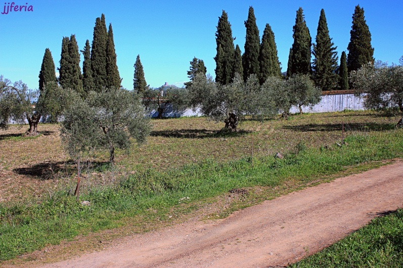 Mariandrés43